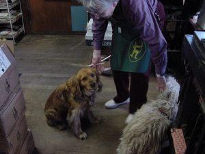 Jocelyn with dogs